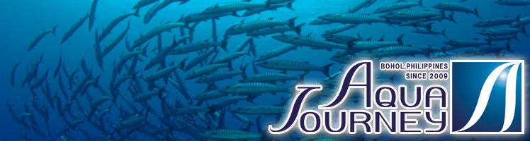 ボホールの日本人常駐のダイビングショップ/ボホールでのダイビングはアクアジャーニーへ